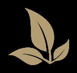 Bronzage au  feuilles de henné